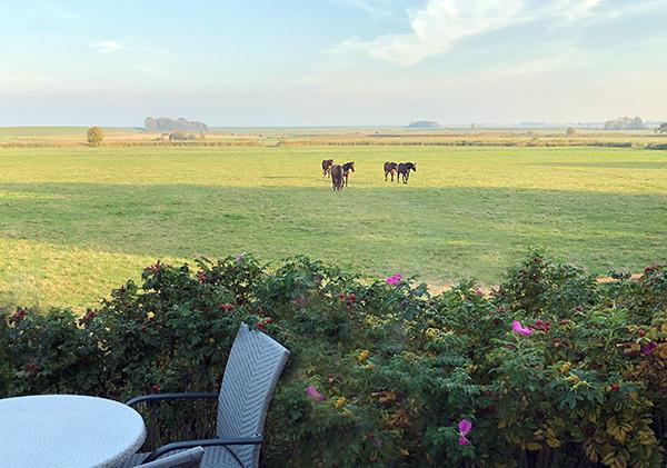 natur urlaub ferienwohnung dangast pferdeweide